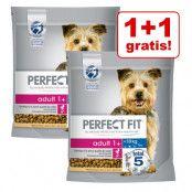 1 + 1 på köpet! 2 x 1,4 kg Perfect Fit hundfoder - Adult (<10 kg)