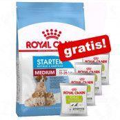 Stor påse Royal Canin Size + 4 x 50 g Educ belöningsgodis på köpet! - Medium Starter Mother & Babydog (12 kg)
