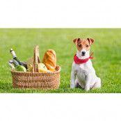Våren är på väg - Fika med din hund!
