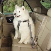 Bilsele för hundar Grå