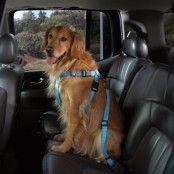 Cruising Bilsele för hundar